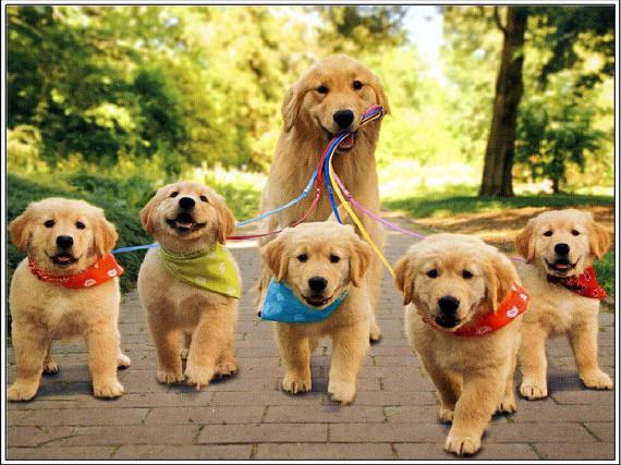 Importação de Artigos para Pet Shop